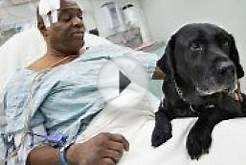 Web Campaigns Support Blind Man, Guide Dog Who Fell Onto